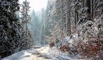 las w górach zimą